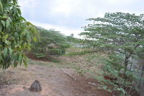 2166 sqm -land-sale-siem reap-180$ (3)