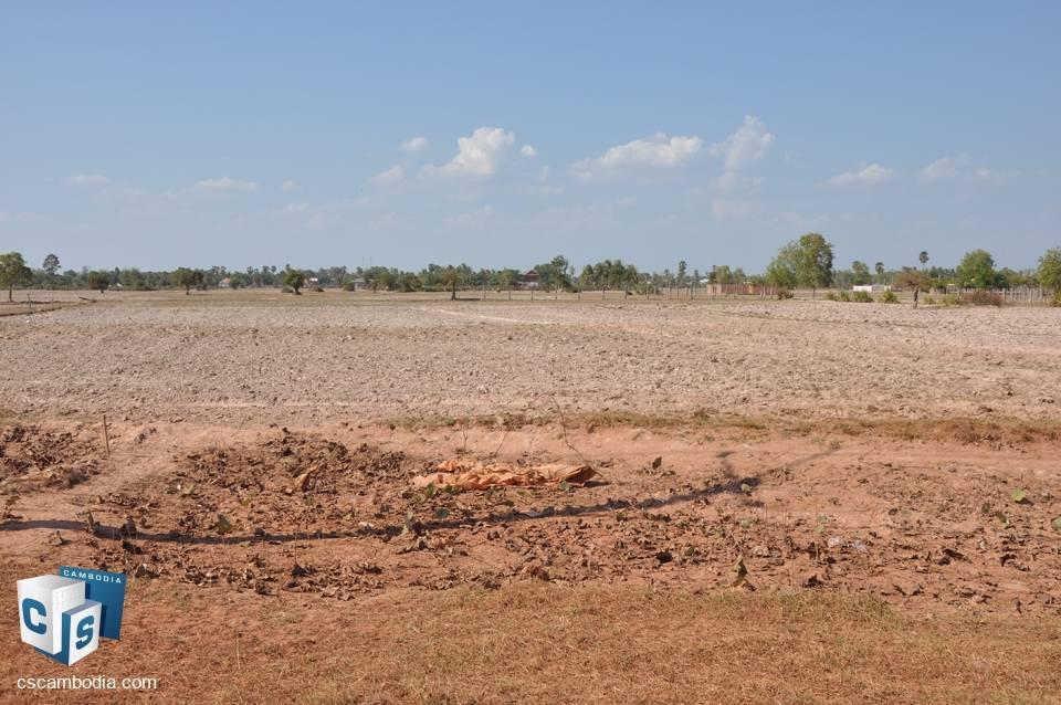 11,000 sq.m. Land For Sale -Sreng village – Krobey Real district – Siem Reap.