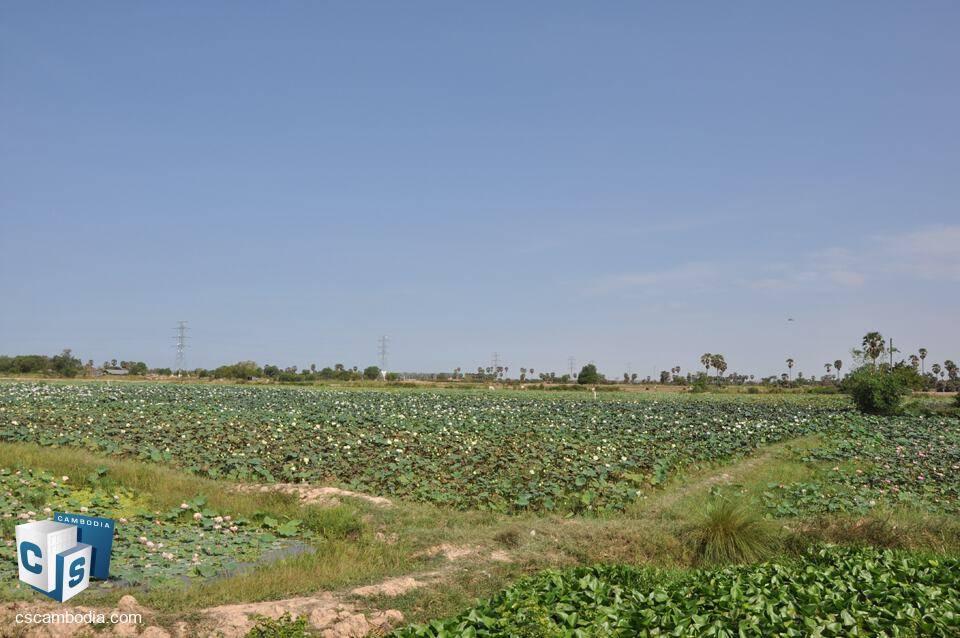 40000 sq m Land – For Sale – Phnom Krom Village – Siem Reap