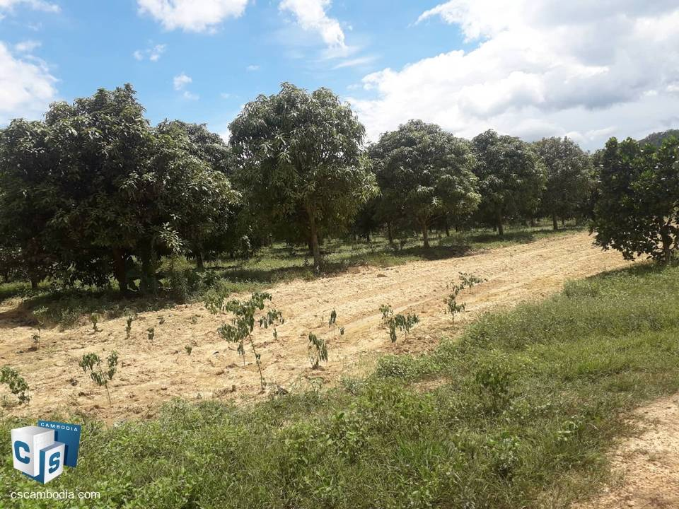 100 to 1000 Hectares of Land – For Sale – Takean commune – Tek Chu District – Kampot Province