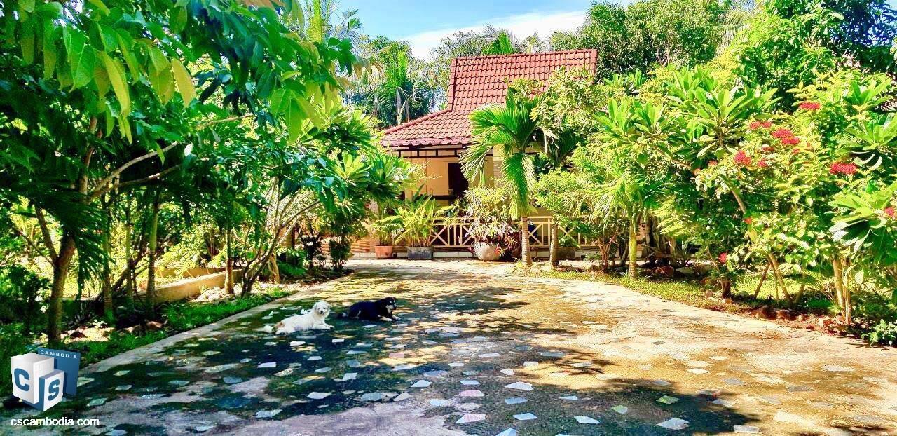 Beautiful Houses & Gardens – For Rent – Kok Chork – Siem Reap