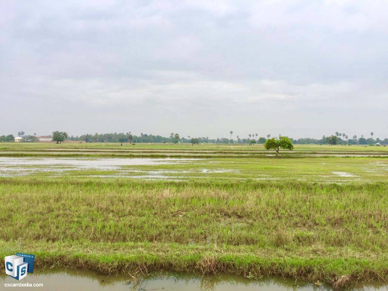 1,085 Sq Meters Of Land – For Sale – Chreav Commune– Siem Reap